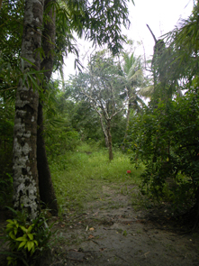 Coconut Island - Private island in the backwaters.